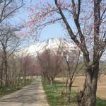 5月の羊蹄山